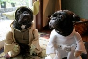 cachorro-star-wars16