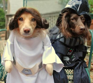 cachorro-star-wars17