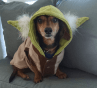 cachorro-star-wars2
