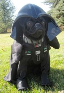 cachorro-star-wars4