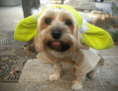 cachorro-star-wars6