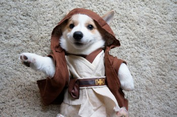 cachorro-star-wars7