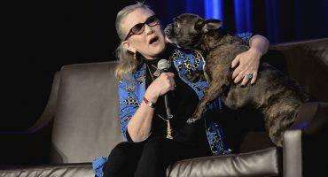 El perrito de Carrie Fisher vio ´Star Wars: The Last Jedi´ y reconoció a su dueña en pantalla