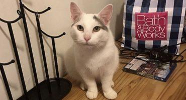 Conoce a Pierogi, el hábil gatito que puede esconderse casi en cualquier parte
