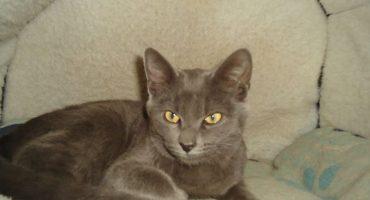 ¡Hurra! Vecina del AICM encontró a Pericles, el gatito que VivaAerobús perdió