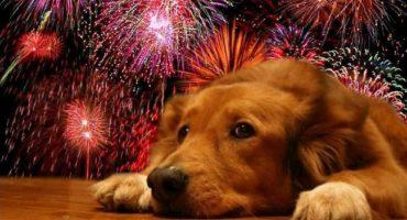 Asustado por los cohetes, perro se aventó desde un onceavo piso