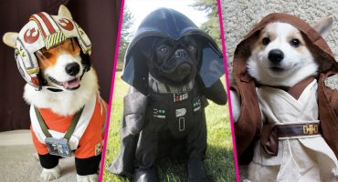 17 fotos de perritos que son más fans de Star Wars que tú