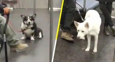 ¡AAWWW! Este duelo de miradas entre perritos es lo que necesitas para ponerte de buenas