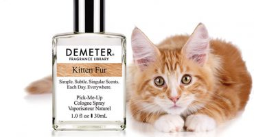 Ahora sí lo vimos todo: Sacan perfume con olor a pelo de gato