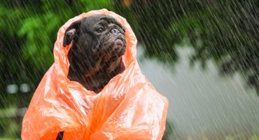 No guardes tus chamarras y ve sacando tu paraguas porque se avecinan las lluvias 😰