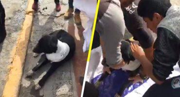 Presunto policía balea a un perrito callejero nada más porque se le antojó 😡