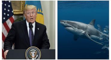 El tiro por la culata: odio de Trump por los tiburones termina por ayudarlos