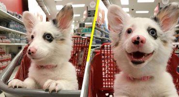 Esta perrita se emociona más que tú cuando la llevan de compras al supermercado