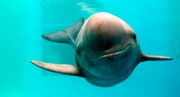 Refuerzan acciones ante el riesgo de extinción de la vaquita marina