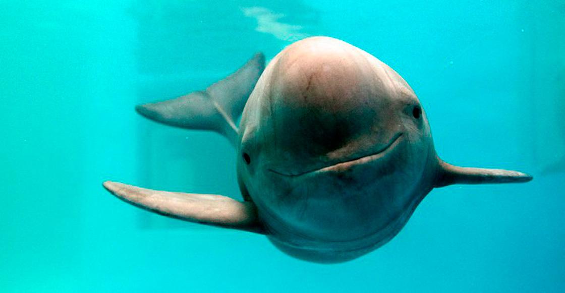 Atacan a buque de vigilancia de vaquita marina en Alto Golfo de California