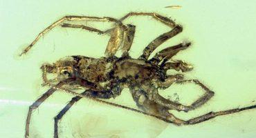 Dos fobias en uno: Insecto mitad araña y mitad escorpión 😰