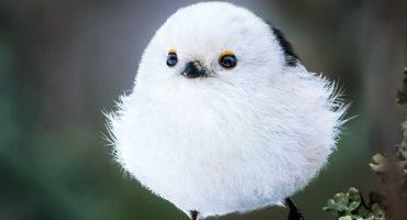¡Gorditos y bonitos, muchachos! Así lucen las aves fotografiadas por este hombre