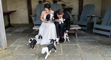 ¿Para qué usar ramos si puedes usar perritos? Así esta tierna sesión de fotos de recién casados