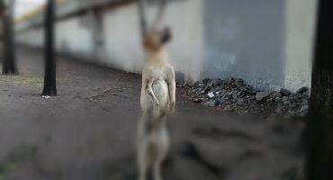 Amarran cuerpo de perro a árbol en la delegación Iztacalco