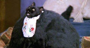 Meow! Así es como se verá Salem en la nueva versión de 'Sabrina'