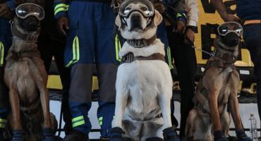 Frida y otros perritos rescatistas son premiados por su labor en el #19S