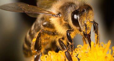 ¿Black Mirror? Walmart patenta su plan para crear abejas robot