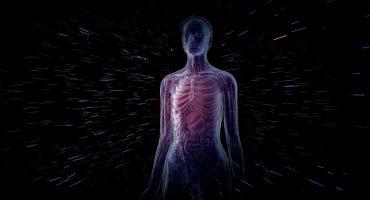 ¿Qué? Descubrieron un nuevo órgano en el cuerpo humano