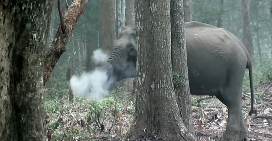 Elefante expulsando humo impresiona a investigadores