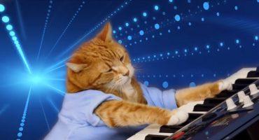 Llévame a mí: Murió Bento, el gatito pianista más famoso de la internet