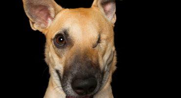 Estas fotos de perritos discapacitados te van a derretir el corazón