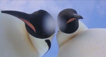 Unos pingüinos encontraron una cámara de investigación y las selfies fueron inevitables