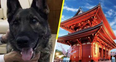 Mandaron por error a un perro hasta Japón 
