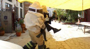 Ataque de abejas en una iglesia dejó 15 heridos en la CDMX