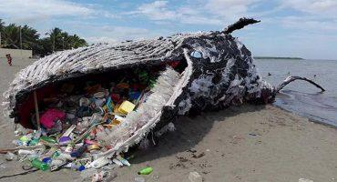 La verdadera historia detrás de la ballena muerta por plástico en España