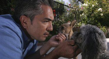 Un ladrón intentó entrar a robar la casa de César Millán pero sus perritos lo evitaron
