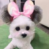 goma-perrito-japones-famoso-instagram-9