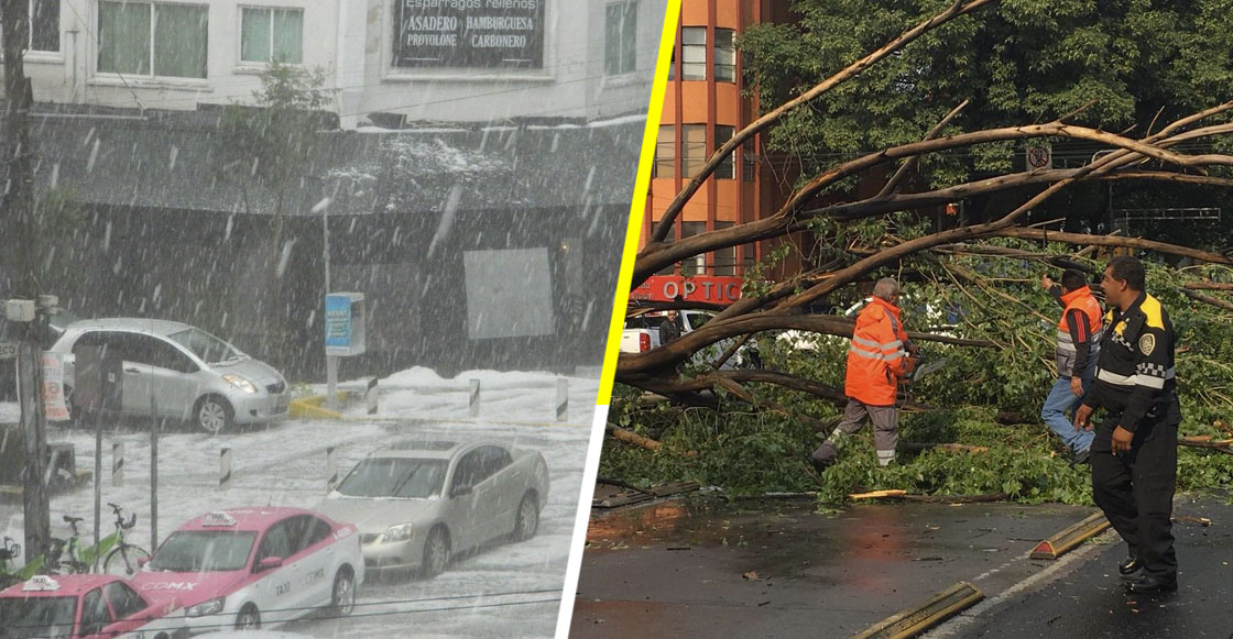 Árboles caídos, inundaciones y calles blancas: El resultado de la granizada en la CDMX y el Estado de México