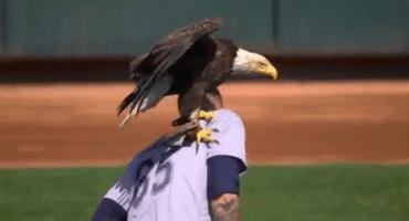 ¿Dónde se paró el águila? ¡EN JAMES PAXTON! el pitcher de los Mariners tuvo un peculiar visitante