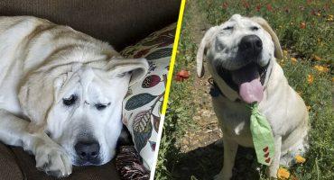 Aww! Este perrito deforme fue rescatado y le cambiaron la vida ❤️😭