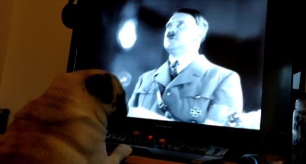 Acusan a comediante por enseñar a su perro saludo nazi