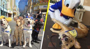 Awww! Estos perritos de asistencia se divirtieron a lo grande en Disneyland