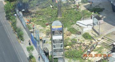 Con permiso vencido, talan 46 árboles del Polyforum Siqueiros para construir torre