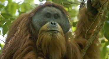 Las 10 nuevas especies descubiertas en el último año
