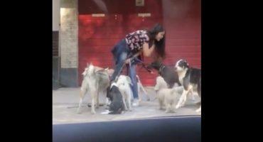 Graban a una cuidadora de perros en Polanco mientras los maltrata