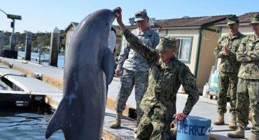 Y en la nota idiota del día: Delfines militares ucranianos murieron