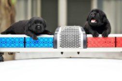 La policía de Taiwán recluta cachorritos para su unidad antibombas