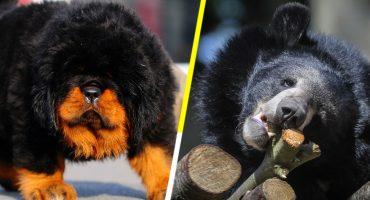 Y en la nota idiota del día: Una familia crió a un oso creyendo que era un perro 🐻🐶