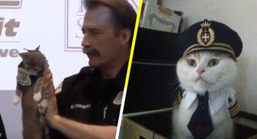 Aww! Una estación de policía en EUA recibió a su primera integrante de la unidad felina 🐱