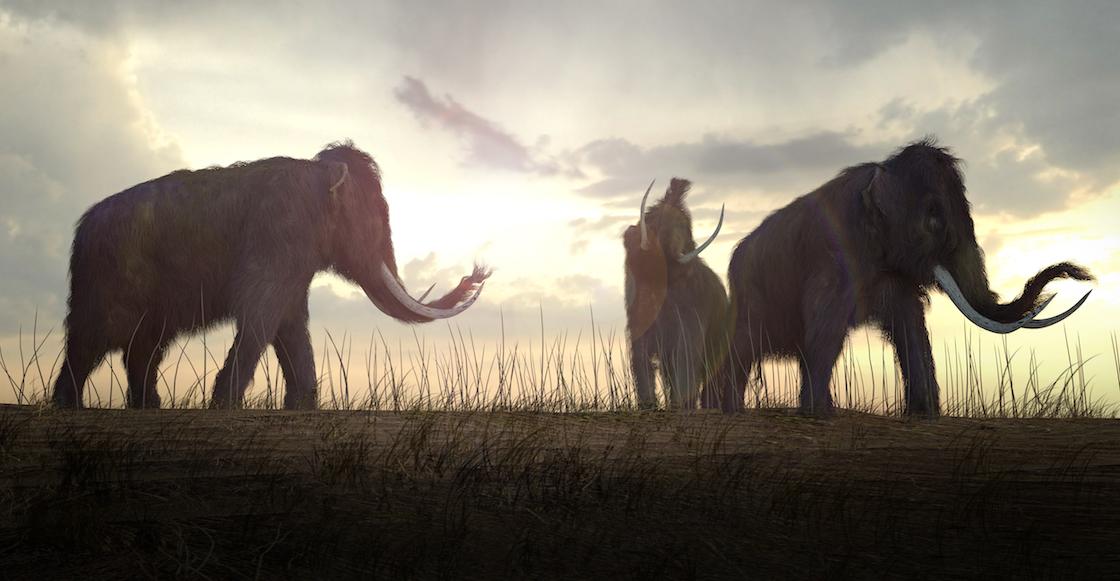 Manny Manito, ¿eres tú? Encuentran restos de mamuts en San Luis Potosí
