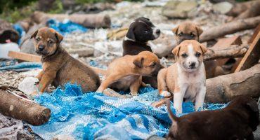 No es broma: En un municipio del Estado de México te pueden meter a la cárcel por alimentar a perritos callejeros